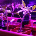 geolighting, светильники для растений, светильники для роста растений, как выбрать светильник для растений, лучшие светильники для растений, как работает светильник для растений